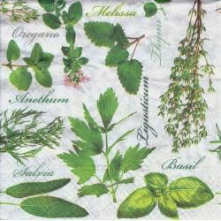 Primula veris elatior 'Colossea', Polyanthus