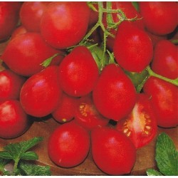 Tomato 'Radana'