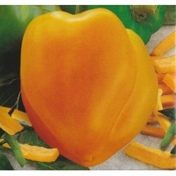 Sweet Pepper 'Afrodita'