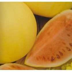 Watermelon 'Golden wolicy F1'