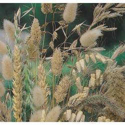 Ornamental grasses mixture