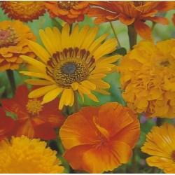 Blomsterblanding - Orange