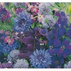 Blomsterblanding - Blå