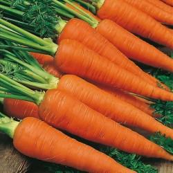 Carrot 'Cortina F1'