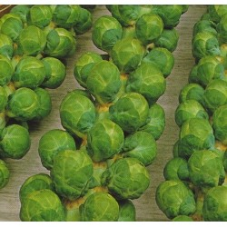 Brussels Sprout 'Dolores F1'