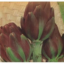 Artiskok 'Violet de Provence'