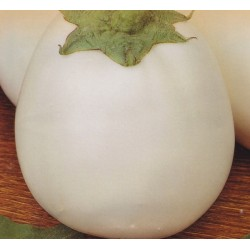 Aubergine 'White Egg'