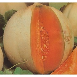 Melon 'Charentais'