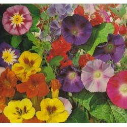 Blomsterblanding -...