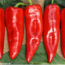 Chili Pepper 'Draky F1'