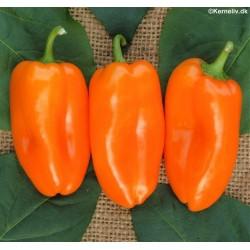 Snack peber 'Hamik'