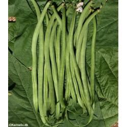 Buskbønne 'Argus', Økologisk
