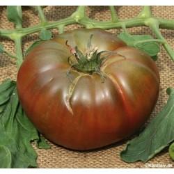 Tomato 'Noire de Crimée'