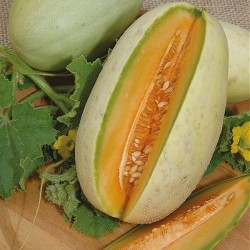 Cantaloupe melon 'Melba'