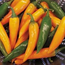 Chilipeber 'Bulgarian Carrot'