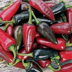 Chili Pepper 'Hungarian Black'