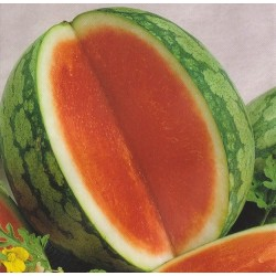 Vandmelon 'Granate F1'
