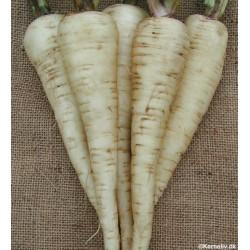 Parsnip, Organic