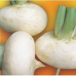 Turnip 'Bianca Lodigiana'