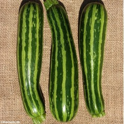 Squash/Courgette 'Green Tiger F1'