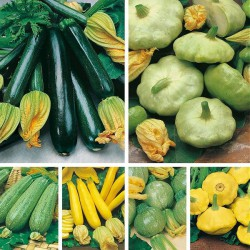 Courgette/Squash blanding