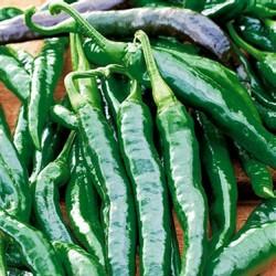 Chilipeber 'Chilaca'