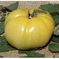 Tomat 'White Beauty'