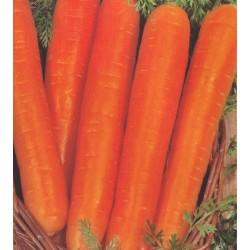 Carrot 'Flyaway F1'
