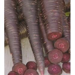 Carrot 'Purple Sun F1'