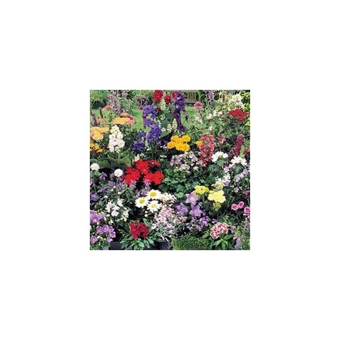 Blomsterblanding - Stauder
