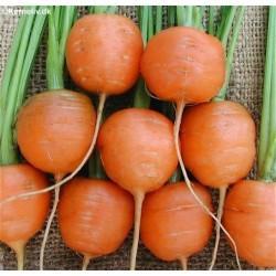 Carrot, Baby 'Pariser Markt 4'