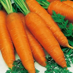 Carrot 'Autumn King 2'
