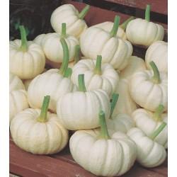 Pumpkin 'Baby Boo'