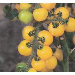 Cherrytomat 'Goldkrone'