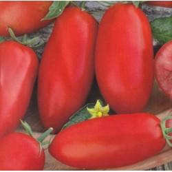 Tomat 'Zyska'