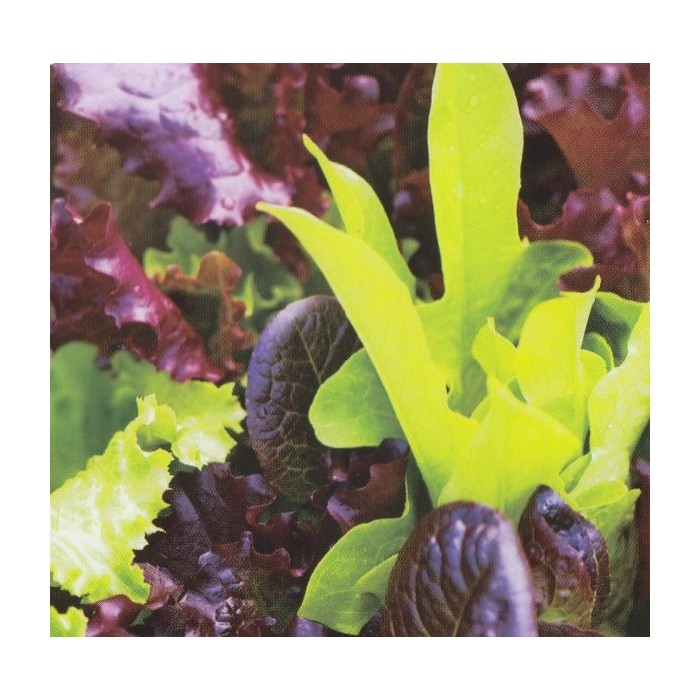 Salatblanding 'Baby Leaf mix'
