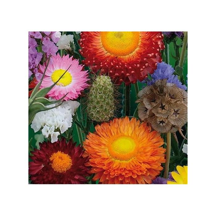 Blomsterblanding 'Evighedsblomster'