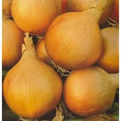 Bulb Onion 'Stuttgarter...