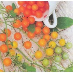 Carrot 'Colmar à Coeur Rouge 2', Organic