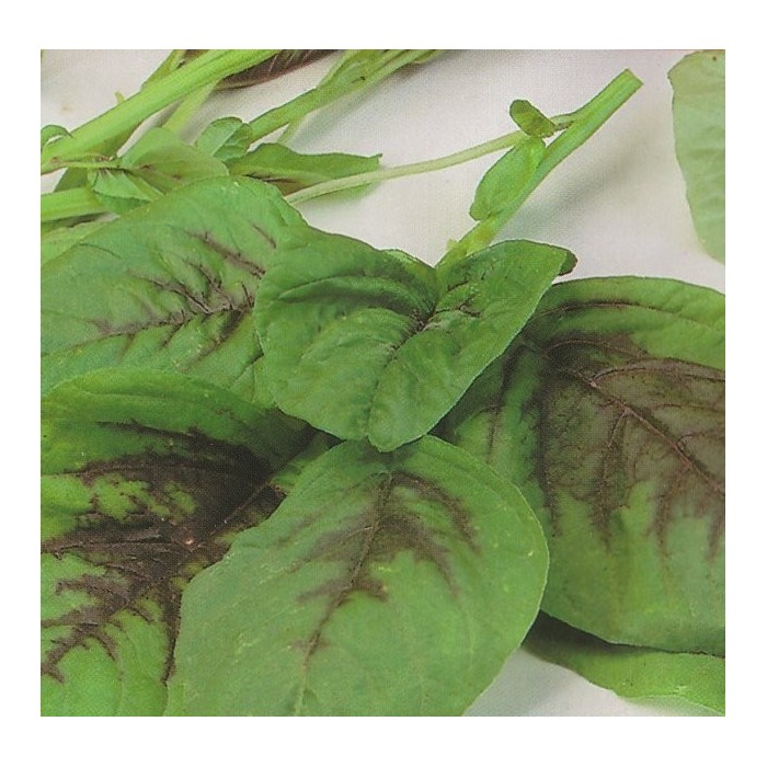 Calaloo(Amaranthus tricolor)