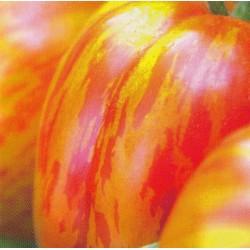 Tomat 'Striped Stuffer'