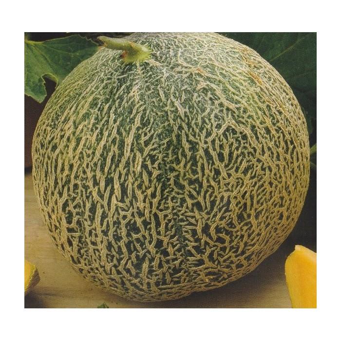 Melon 'Retato Degli Ortolani'
