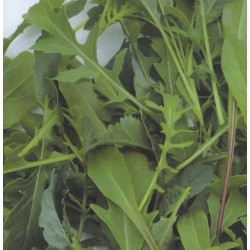 Salatblanding 'Provence Mix'