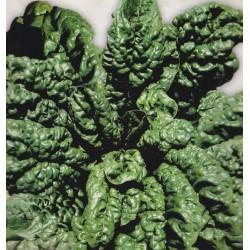 Spinach 'America'