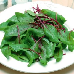 Spinach 'Red Cardinal'