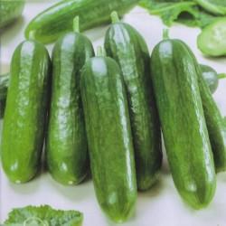 Cucumber 'Iznik F1'