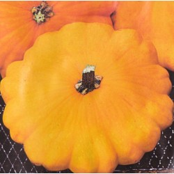 Squash 'Patisson Orange'