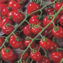 Cherry Tomato 'Gardenberry F1'