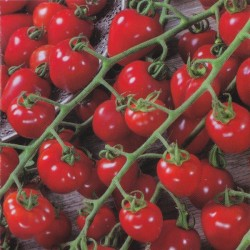 Cherrytomat 'Gardenberry F1'