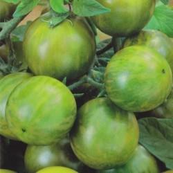 Tomat 'Green Zebra'